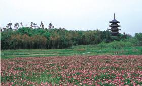 備中国分寺・五重の塔写真